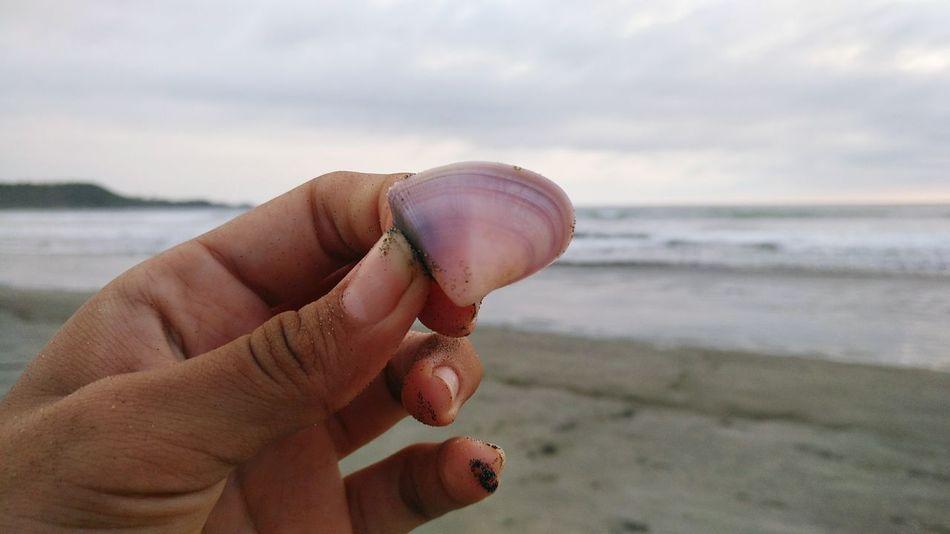 EyeEm Selects Guanacaste, Costa Rica Costa Rica 🇨🇷 Costa Rica❤ Beach Time Beach Life Beach Beachphotography TheWeekoneyem TheWeek On EyEem TheWeekOnEyeEM Naturaleza Natural Beauty