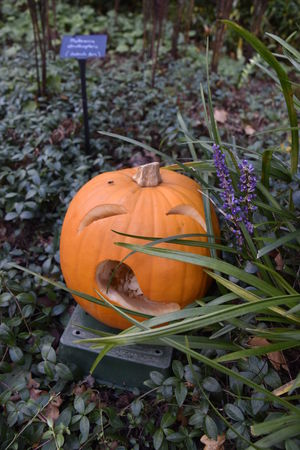 Agriculture Autumn Beth Chato Gardens Day Elmstead Market Field Food Food And Drink Gourd Growth Halloween Halloween Leaf Nature No People Orange Color Outdoors Plant Pumpkin Tradition Vertical