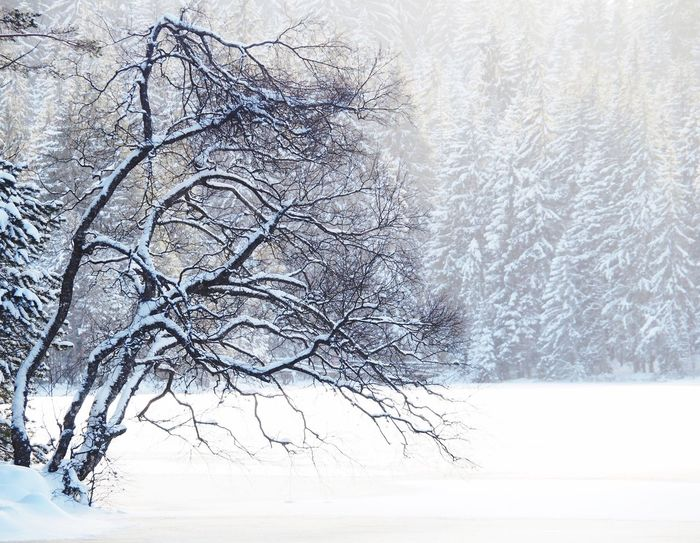 Snow Winter Cold Temperature Bare Tree Nature Beauty In Nature Tree Branch Weather Tranquility Scenics Frozen No People Landscape Day Outdoors Snowing Freshness