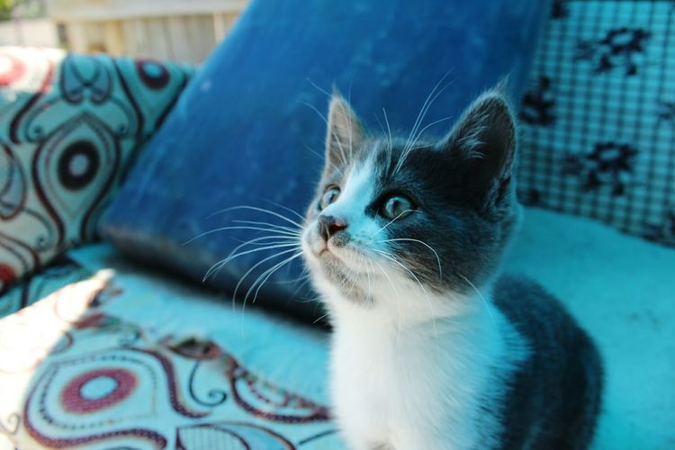 Close-up of kitten looking away