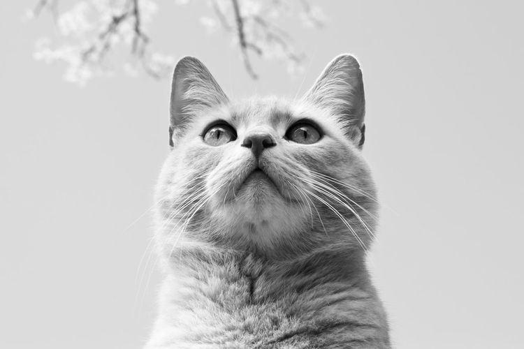 Animal Themes Black And White Cat Day No People One Animal Outdoors Pets Portrait Close-up
