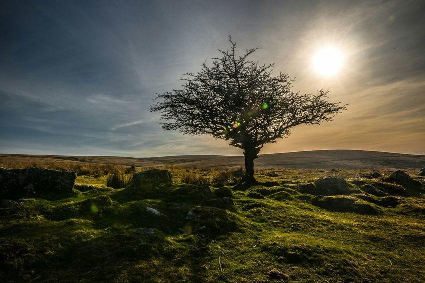 Dartmoor Hugging A Tree Golden Hour England Nature_collection Landscape EyeEm Best Shots