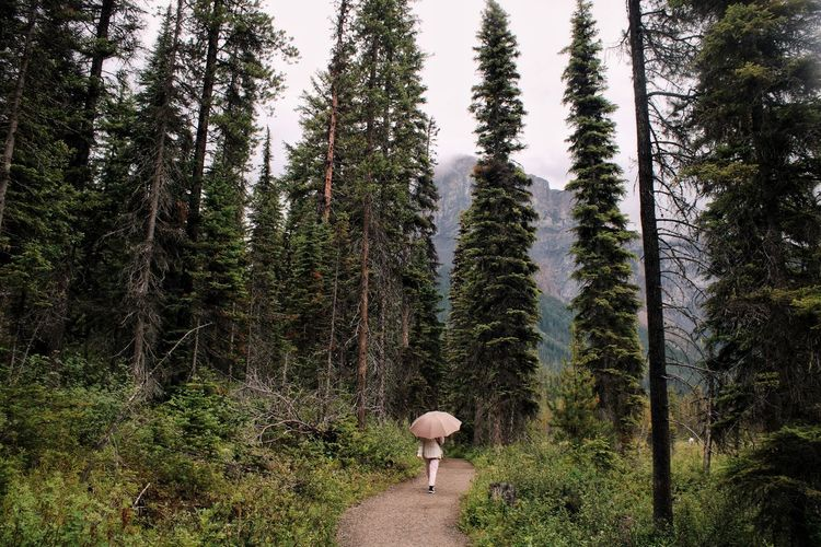 Umbrella Rain Wet Growth Rainforest Hike Explore Nature British Shorthair National Park Path Nature Beauty In Nature person Outdoors Canada Perspective Travel Destinations Moody Weather Growth Lush Foliage Adventure Tree Forest Pine Tree Sky Landscape Foggy