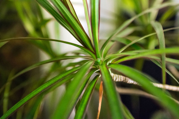 close up with bukeh of a plant Canoma Photography Close-up Freshness Green Color Pflanzen Plant Plant Still Life Colors And Patterns