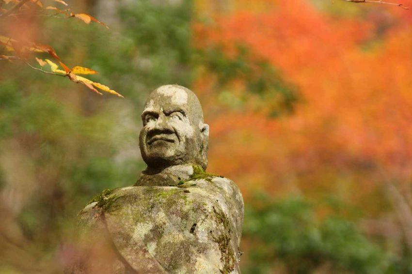 Autumn Autumn Leaves Colored Leaves Japan Hakone Nature Outdoors Stone Buddhist Image