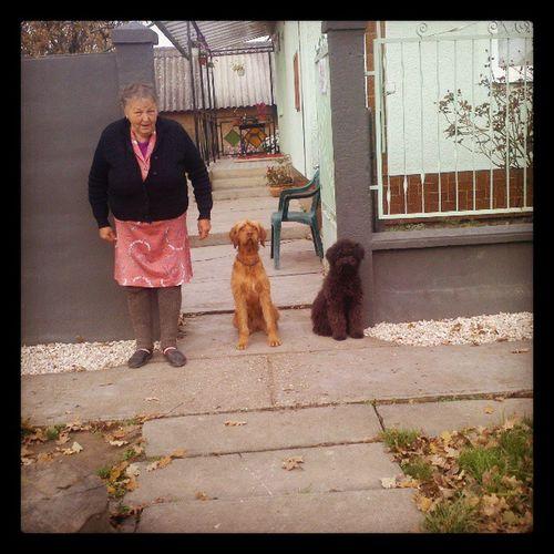 Welcome home! Grandma Doggies Poszke Bogár weekend