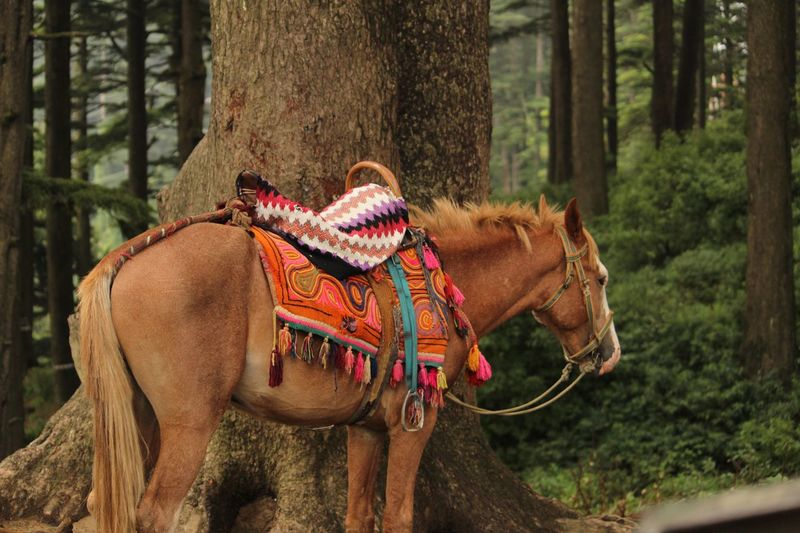 Horse Standing By Tree Trunk