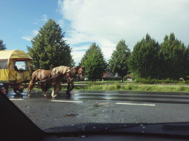 Gegenverkehr Emsland Papenburg