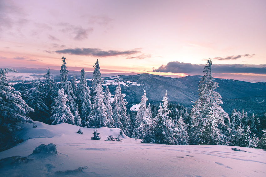 Amazing sunset over Hasmas Mountains, Romania Frozen Landscape_Collection Nature Sky And Clouds Sunset_collection Trees Winter Beauty In Nature Cold Temperature Day Idyllic Landscape Mountain Nature No People Outdoors Scenics Sky Snow Sunset Tranquil Scene Tranquility Tree Weather Winter