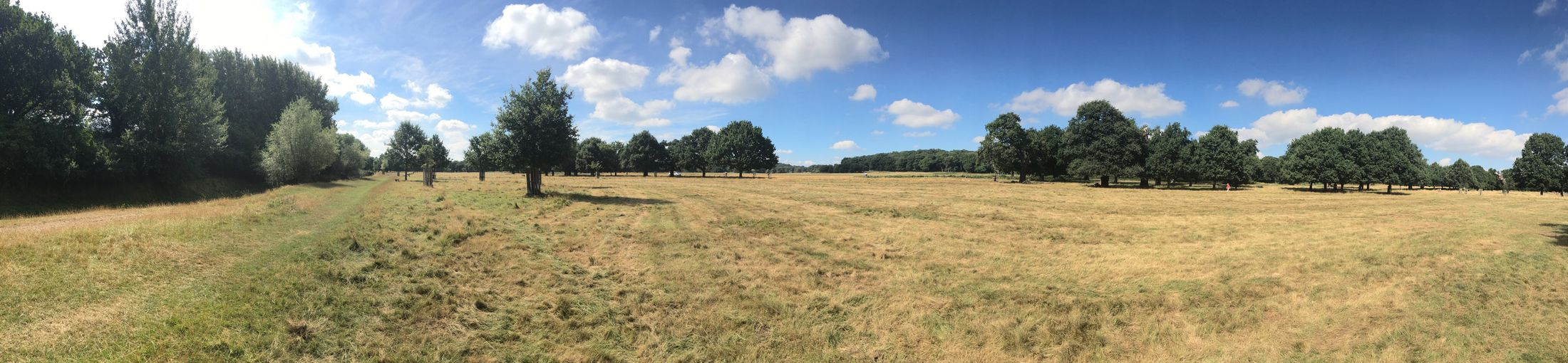 Eyeemphoto Ricchmond Park Parkland Nature Beauty Tranquil Scene Idyllic Sunny Day London England, UK Europe Nobody Non-urban Scene Panoramic Photography Trees Landscape Scenics Tranquility Solitude Beauty In Nature Clouds And Sky Field Outdoors Grassy Day