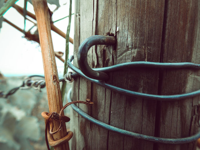 Close-up of rusty hanging on metal fence against wall