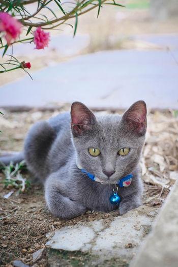 Portrait of a cat on a field