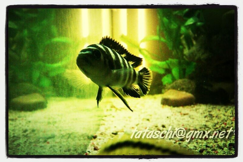 Aquarium 450 L