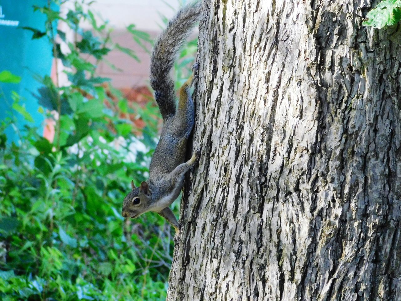 one animal, animal themes, animals in the wild, tree, animal wildlife, day, tree trunk, mammal, no people, squirrel, nature, outdoors, focus on foreground, bat - animal, close-up, beauty in nature, bird