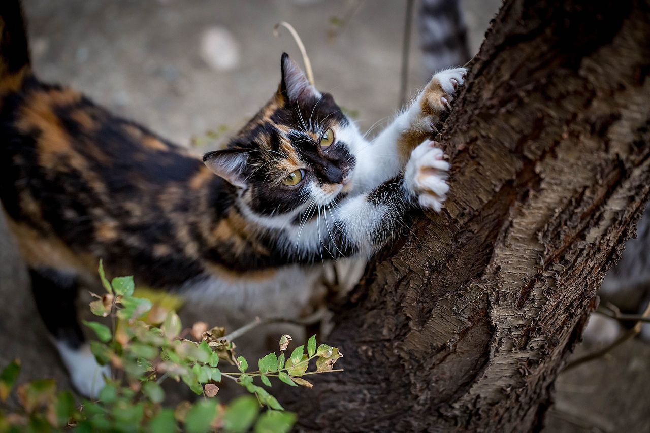 animal themes, animal, mammal, one animal, feline, vertebrate, cat, tree, domestic animals, tree trunk, domestic cat, trunk, domestic, pets, selective focus, plant, no people, nature, relaxation, looking at camera, whisker