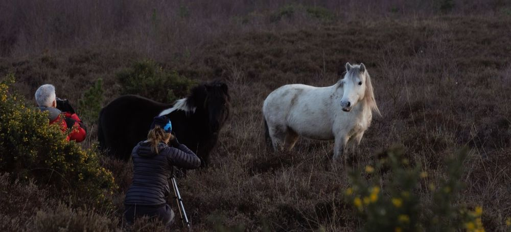 Adventurelands Photography Explorers Connect New Forest National Park Wildlife Photography Animal Themes Beauty In Nature Day Field Grass Mammal Nature Outdoors People Photography Real People Standing Tranquil Scene