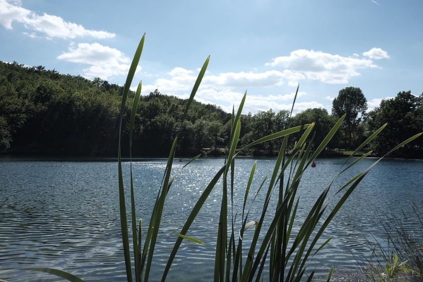Beauty In Nature Cloud - Sky Day Grass Green Color Growth Lake Nature No People Outdoors Plant Rippled Scenics Sinizzo Sky Tranquil Scene Tranquility Tree Water
