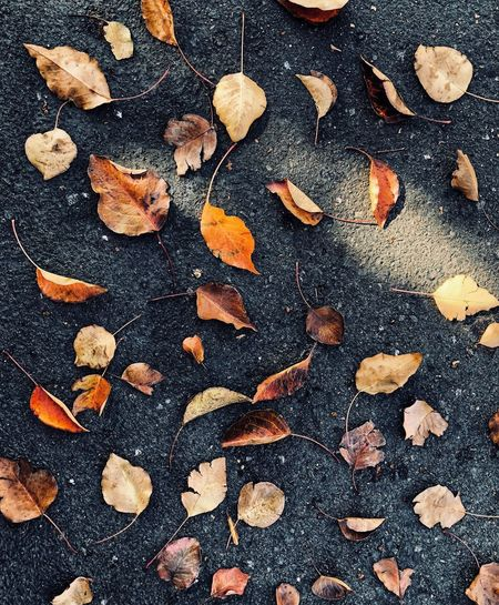 📸🍂 beauty lies in difference Dry Autumn Leaf Full Frame Large Group Of Objects Change No People Backgrounds Outdoors Close-up Nature Day Freshness EyeEmNewHere