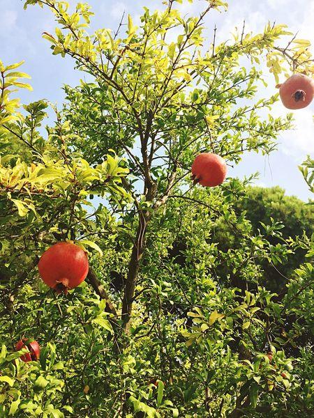 Mittelmeer Türkei Granatapfel Obst Sommer Sonne Sonnenschein ❤