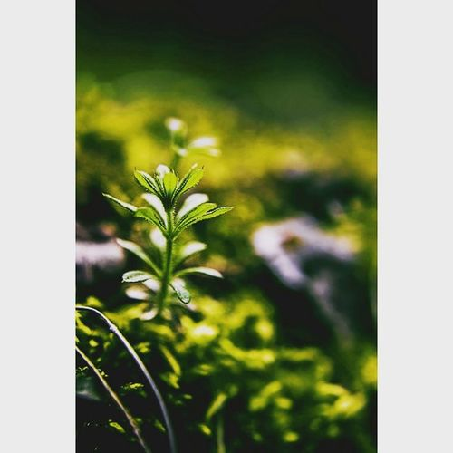The little things in the world. Makros Michaellangerfotografie Beautifullight Fotografie Photography Photographyislife