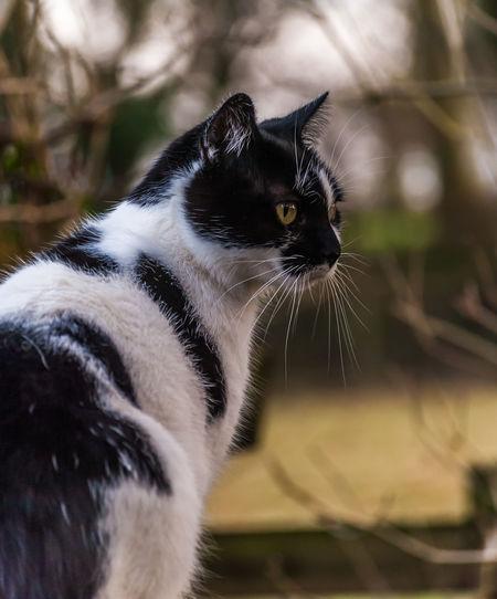 Ella Animal Themes Cat Close-up Day Domestic Animals Domestic Cat Feline Mammal No People One Animal Outdoors Pets Portrait