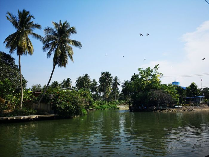 Scenic view of lake and palm trees against sky