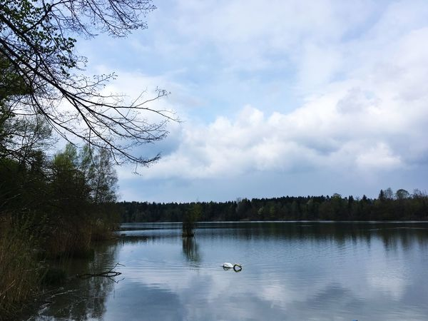 Tree Sky Water Lake Cloud - Sky Nature One Animal Reflection Beauty In Nature Animals In The Wild Animal Themes Duck Day Tranquil Scene Outdoors Bird Tranquility Scenics Animal Wildlife No People Beauty In Nature Bavaria Swan Lake Reflection Water Bird