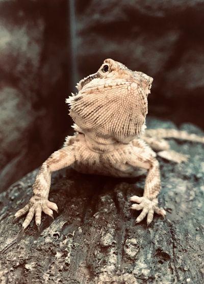 Dragon pose