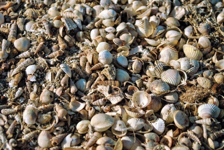 Full frame shot of seashells outdoors