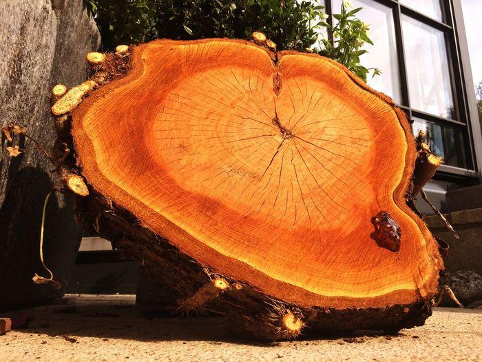 Kirschbaum Kirschbäume Kirschbaum💫 Holz Holzschnitt Holzscheite Cherry Wood Wood Wooden Structure Wood - Material Bois Legno Legno Wood