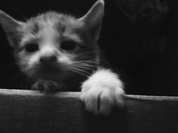 Taking Photos OpenEdit EyeEm Gallery EyeEm Best Shots Eye4photography  IPhoneography Black & White Black And White Blackandwhite Cats