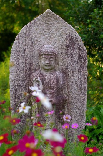 Flower Meditation Buddha Statue Buddha Travel Trip Sigthtseeing Pink Flower 🌸 Cosmos Flower 秋桜 コスモス 般若寺 Japan No People Beauty In Nature Statue Sculpture Nature Photography