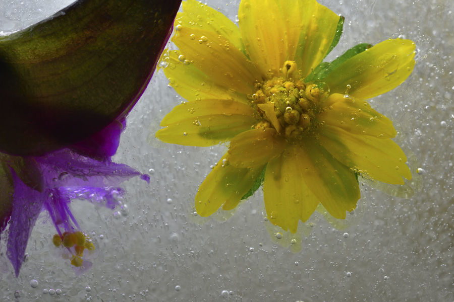 Frozen water, bubbles and plants freeze up. Frozen Ice Water Drops Background Beauty In Nature Blooming Bubble Close-up Cold Temperature Day Drop Flower Flower Head Fragility Freeze Freshness Growth Nature No People Outdoors Petal Stamen Water Wet Zero Degrees