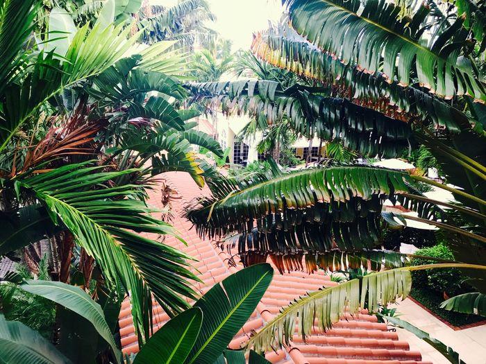 Window view Palm Tree Worth Avenune court No People First Eyeem Photo The Week On EyeEm