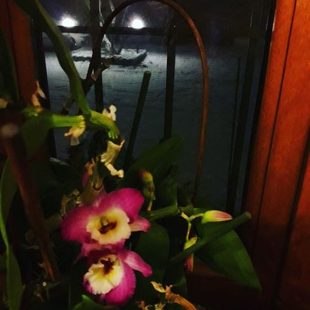 Snow outside Flower inside Orchids Orchidee. Snow ❄ Neve Winter Spring Flowers Interior Views Flower Nature Growth Beauty In Nature Indoors