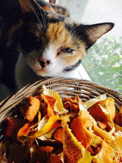 Cat Bored Orange Cats
