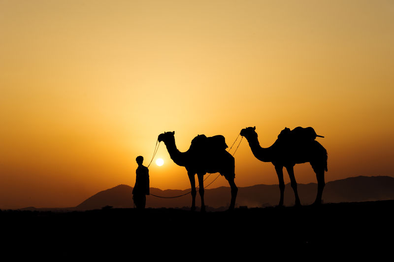 Silhouette Of Man And Two Camels Standing In The Desert At Sunset