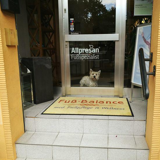 Cat by text on door