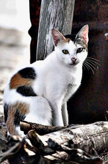 #cat#cute#photo#animal#photography#love#great#good