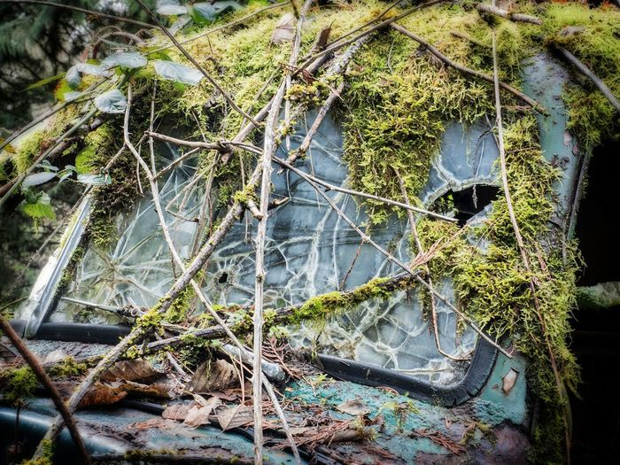 Architecture Beauty In Nature Branch Close-up Day Growth Leaf Nature No People Outdoors Plant Tree