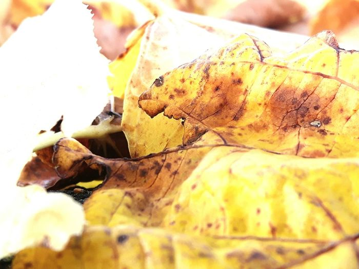 No People Close-up Nature Day Outdoors EyeEm Best Shots Autumn Autumn Leaves Leaves Nature Nature Photography Nature On Your Doorstep S5 Galaxy Shot