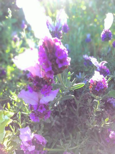 Flower Purple Nature Flower Head