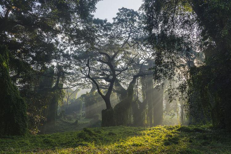 The path Woods Fog Mist Sunbeam Sunrays WoodLand Tree Branch Fog Shadow Forest Sky Grass Growing Plant Life Silhouette Sunrise Shining Sun Hazy  Foggy