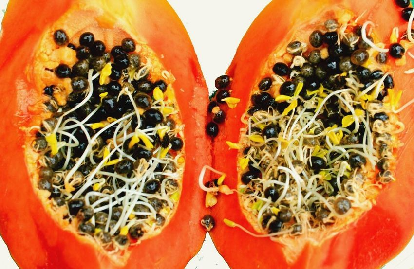 Orange Color Fruit No People Nature