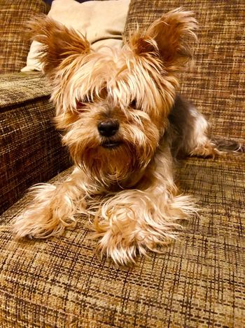 Mammal One Animal Animal Themes Animal Dog Canine Domestic