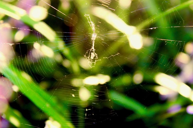 Catching Light Green Animal Leg Animal Themes Animals In The Wild Beauty In Nature Close-up Day Focus On Foreground Fragility Green Background Insect Nature No People One Animal Outdoors Small Spiderweb Spider Spider Web Survival Warm Light Web