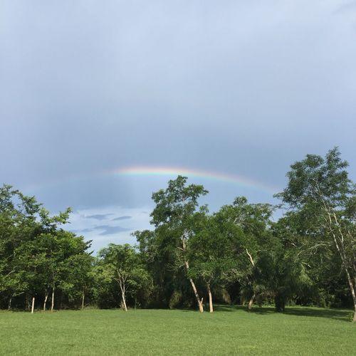 Rainbow Rainy Days Tree Nature Beauty In Nature EyeEmNewHere