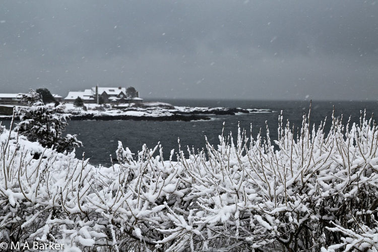 Snowing in Maine Kennebunkport Kennebunkport Maine Maine Snowy Scene Winter Beauty In Nature Cold Temperature Day Horizon Over Water Nature No People Outdoors Scenics Sea Sky Snow Snowing Snowy Day Tranquility Water Winter