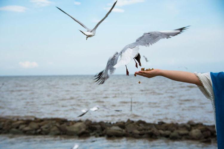 Cropped image of hand feeding black-headed gull against sea