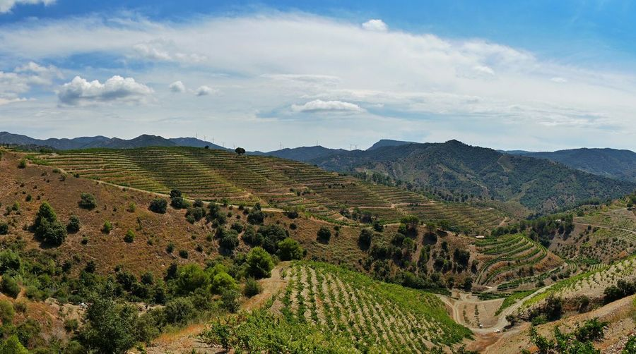 vineyards of Priorat First Eyeem Photo Eye4photography  Nature Nature_collection Summerscape Catalonia Is Not Spain Catalonia Catalunya Rural Scene Agriculture Hill Social Issues Vineyard Sky Landscape Cloud - Sky Plantation Vine Red Grape Grape Winemaking Vine - Plant Winery Terraced Field